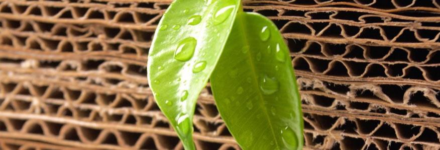Cartone Ondulato Green
